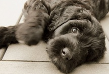 Pet Photos / by Doug Levy