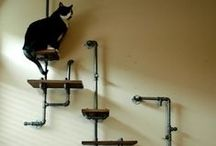 Cat Life + Architecture. / by Grace Wood