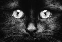 Cats / by Karen Chevallier