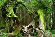 Nature / by Karen Chevallier