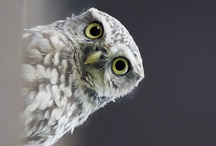 Owl / by Karen Chevallier