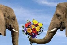 ❤Elephant L❤ve                 / Special animals that God placed on earth. / by Dena Queen Tut