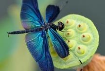 Dragonflies / by Debra Sain