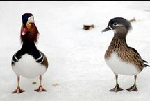 Ducks / by Debra Sain