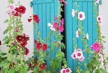 Garden & Yard / by Leslie Schifer