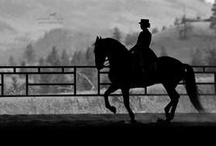 Equine Obcession / by Jesseca Spano