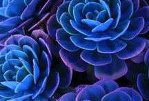 Succulents,Cactus,etc / by Anne Kreider