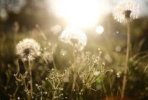 Beautiful / by Autumn Johnson
