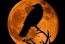 Halloween / by Raven Montoya