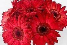 Flowers / public / by Julie Burroughs