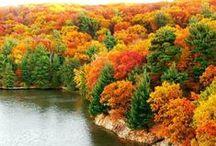 Autumn / by Tammy Marshall