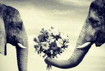 Animals / by Becky Kiser