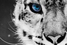 Animals <3 / by Dariann Gallegos