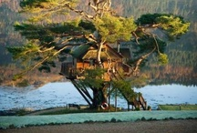 Treehouses / by Little Goodall