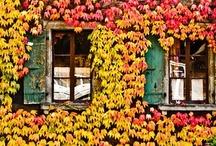 Autumn Love / by Little Goodall