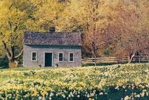 Home Sweet Home / by Hailey Jones
