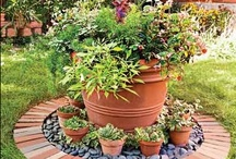 Garden Ideas and flowers / by Laurie Lette