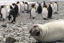Bahahaha! :D / by Eleanor Ouellette