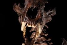 Fossils / by Jen Zatoth