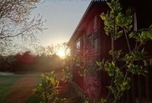 Our Land and Garden / Living on 5 beautiful acres in middle Tennessee means a lot of work and a lot of beauty. Here I will share some pictures from the homeplace.  / by Linda A. Kinsman