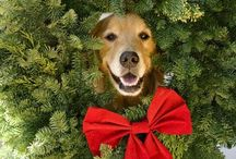 Christmas! / by Elisabeth Molnar