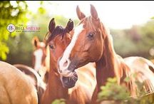 Horse Photography / by Sasha L'Estrange-Bell