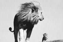 animals / SO CUTE ASDFGHHJLL / by Braylee Clack