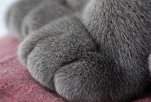 Animals / by Kelly C.