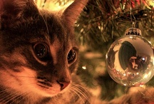 Cats (Mostly) and Christmas / by Sharon Lipsit