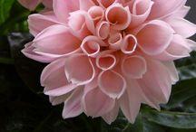 Flowers / by Allison Woodall