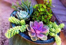 Gardening / by Allison Woodall