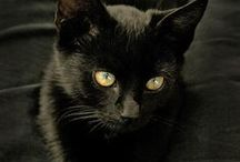 KeeKee and More Black Cats / by Jill DesChenes