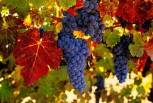 Napa / Excited about my next amazing vacay! / by Allison Woodall