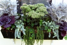 Container Planting & Window Boxes / by Heidi Sentivan