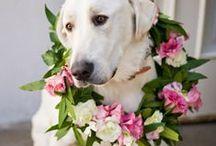 Inspiring { Pets } / by The Little Wedding Helper