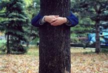 All things TREES! / by Shaun Holyoak
