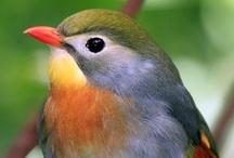 ~ Birds ~ / The wonderful Development of Dinosaurs, birds fethers / by Mach die BESTE aus DIR