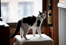 Cat Stuff - Purr / by Anjellicle Cats