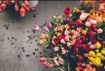 le fleur / by niki d.
