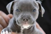 Puppies / Cute Puppies, Funny Puppies, Puppies that aren't really puppies anymore, but we call them puppies, Ugly Puppies, playful Puppies, and anything to do with Puppies! / by R3 Social Media