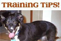 pet tips and tricks / by Brittany Thometz