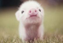 Cute :) / by Michelle Wrinkle