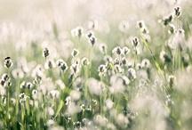 beautiful photography / by Michaela | Hey Look
