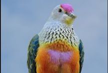 Colorful birds - doves & pigeons / by Carol Sadowsky