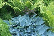 Garden Green 1 / by Susan Smith