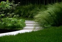 Jardines / Gardens and Patios  Cuadrante Profesional / by Irene Schlick