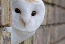 Owls & Foxes  / by Cynthia F