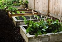 Growing & Gardening / by Meagan Bonomolo