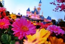 Disney castle's  / by Jewels Disney