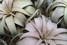 Plants / by Hopeless Lingerie